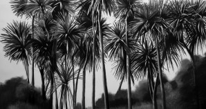 Cabbage Trees Charcoal 2016